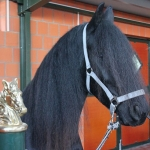 Pferde Waschbox