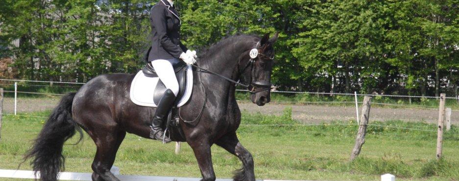 2. Qualifikationsprüfung DFZ-Friesenpferdecup Nord